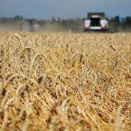 Повышение урожайности за счёт микроудобрений