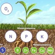 Эффективное поступление калия, азота, фосфора и других элементов питания